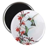 Ruby-throated Hummingbirds Magnet