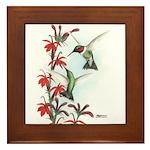 Ruby-throated Hummingbirds Framed Tile