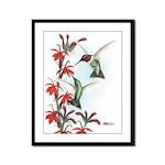 Ruby-throated Hummingbirds Framed Panel Print