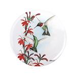 Ruby-throated Hummingbirds 3.5