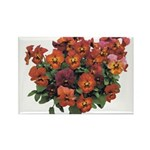 Red Pansies Rectangle Magnet (100 pack)