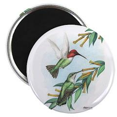 Anna's Hummingbirds 2.25