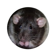 """Silly Rat 3.5"""" Button"""