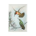 Rufous Hummingbirds Rectangle Magnet (10 pack)