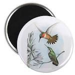 Rufous Hummingbirds Magnet