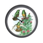 Buff-bellied Hummingbirds Wall Clock