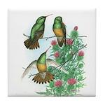 Buff-bellied Hummingbirds Tile Coaster
