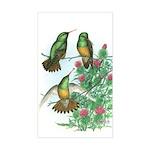 Buff-bellied Hummingbirds Rectangle Sticker