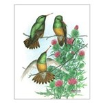 Buff-bellied Hummingbirds Small Poster