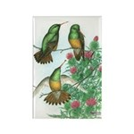 Buff-bellied Hummingbirds Rectangle Magnet (10 pac