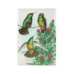 Buff-bellied Hummingbirds Rectangle Magnet