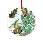 Buff-bellied Hummingbirds Ornament (Round)
