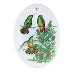Buff-bellied Hummingbirds Oval Ornament