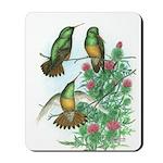 Buff-bellied Hummingbirds Mousepad