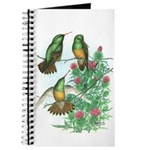 Buff-bellied Hummingbirds Journal