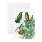 Buff-bellied Hummingbirds Greeting Cards (Pk of 20