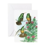 Buff-bellied Hummingbirds Greeting Card