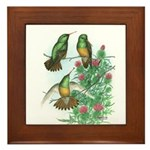 Buff-bellied Hummingbirds Framed Tile