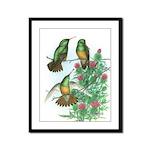 Buff-bellied Hummingbirds Framed Panel Print