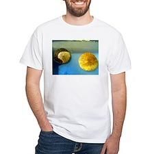 Sand Dollar Shirt