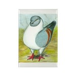 Gazzi Modena Pigeon Rectangle Magnet (100 pack)