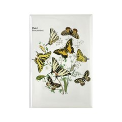 Butterfly 16 Rectangle Magnet (10 pack)