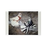 Champion Trumpeter Pigeons Rectangle Magnet