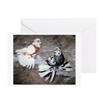 Champion Trumpeter Pigeons Greeting Cards (Pk of 2
