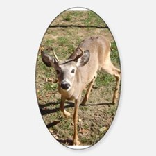 sika deer Oval Decal