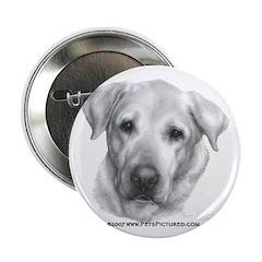Alex, Labrador Retriever 2.25