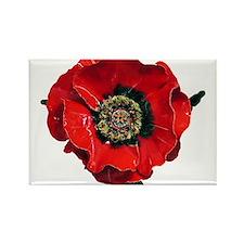 Poppy Rectangle Magnet