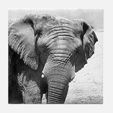 Stubby Tusk Elephant Tile Coaster