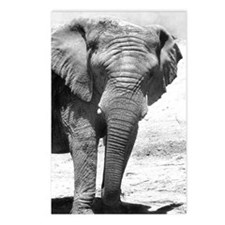 Stubby Tusk Elephant Postcards (Package of 8)