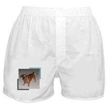 Darling Doxie Boxer Shorts