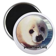 Protect Us! Magnet