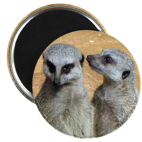 "Magnificent Meerkats. Photos 2.25"" Magnet (10 pac"