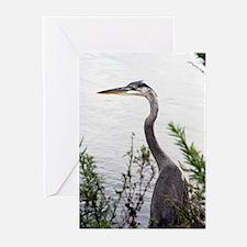 Bird Greeting Cards (Pk of 10)