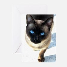 Siamese cat - Greeting Cards (Pk of 20)
