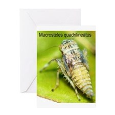 Macrostelid Leafhopper Nymph Greeting Card