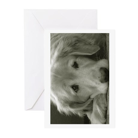 Greeting Cards (Pk of 10) - Blank Inside