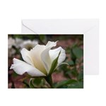 White Rose Cards (Pk of 10)
