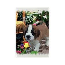 Saint Bernard Puppy Rectangle Magnet (100 pack)