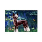 Lilies / Chinese Crested Rectangle Magnet (10 pack