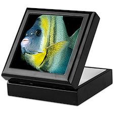 Cortez Angel Fish Keepsake Box
