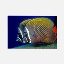 Red-tailed Butterfly Fish Rectangle Magnet