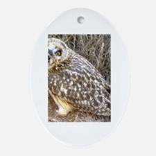 Cute Laughing owl Oval Ornament