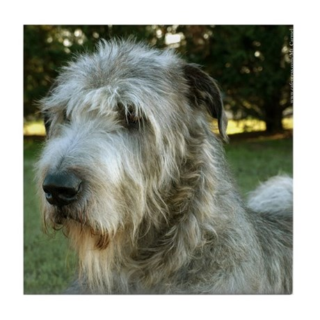 Irish Wolfhound Alert Tile Coaster