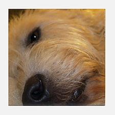 Irish Wolfhound Sleepy Tile Coaster