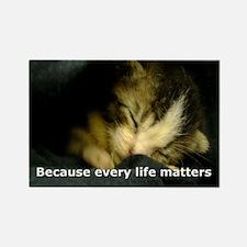 TweetiePie - Rescued feral kitten Rectangle Magnet