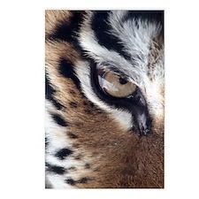 Tiger Eye Postcards (Package of 8)